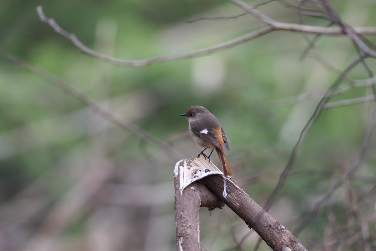 北本自然観察公園 2016/04/02